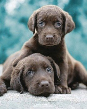 plakat KEITH KIMBERLIN - CHOC LABS
